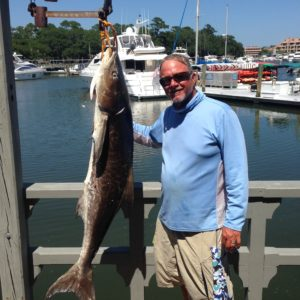 Cobia on Hilton Head