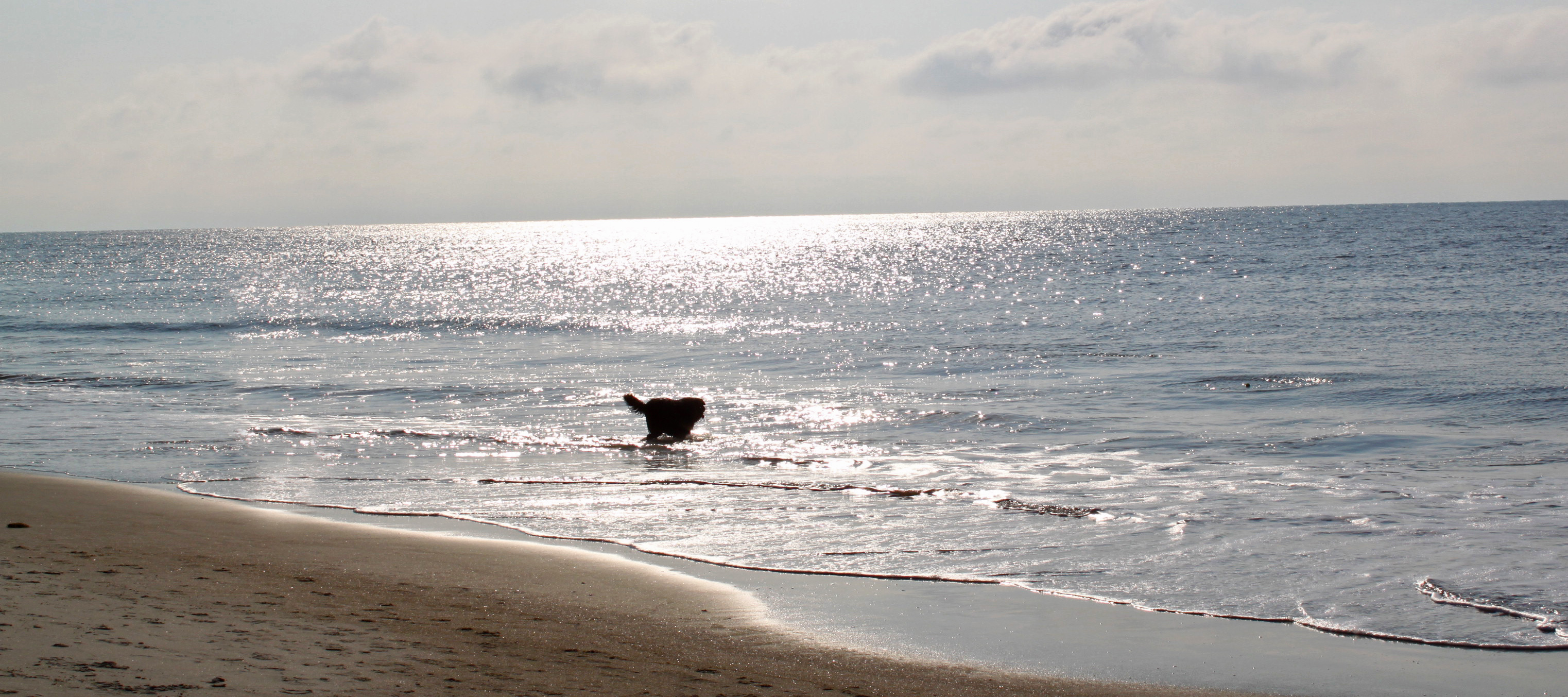 Dog Friendly Hilton Head