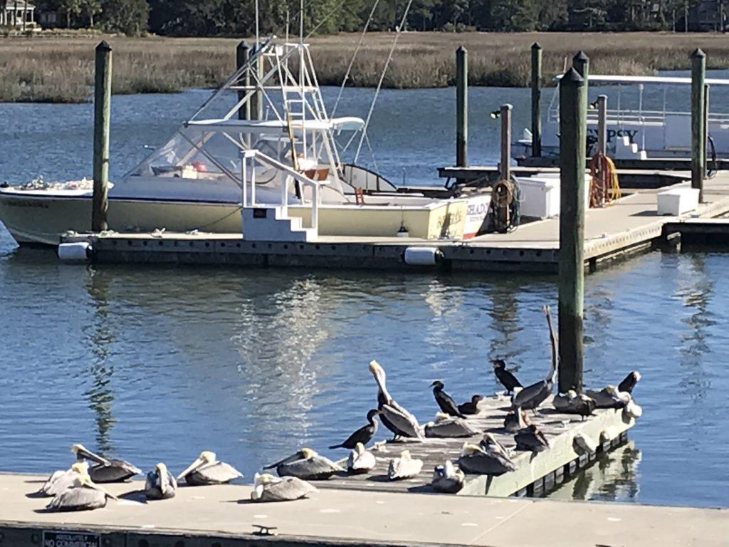 pelicans south beach