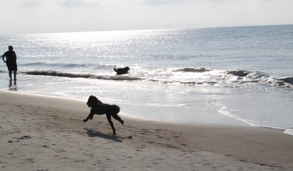 Folly Field Beach Dog Friendly on Hilton Head Island