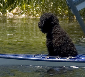 kayaking with pup