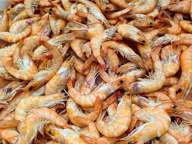 freshly caught shrimp