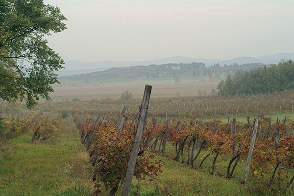 slovenia vinyard