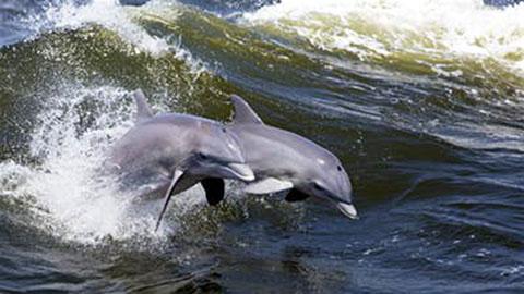 Ocean Dolphin Cruise