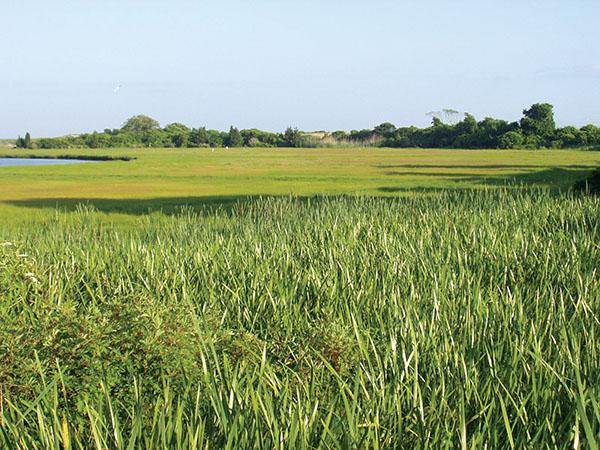 Lowcountry wetlands
